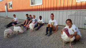 Turkeys lined up for the Small Animal Sale